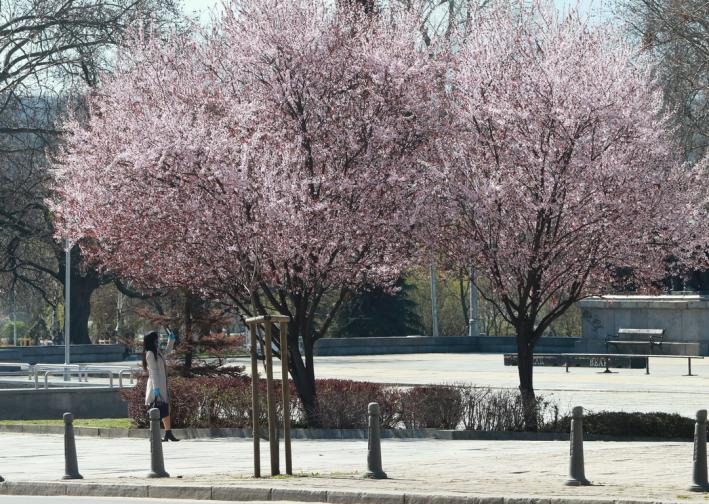 борисовата градина пандемия карантина слънце слънчево време гарван ковид