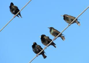 Защо кацналите по жиците птици не ги хваща ток