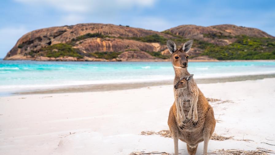 Застрашените бозайници в Австралия са намалели с една трета за 20 години