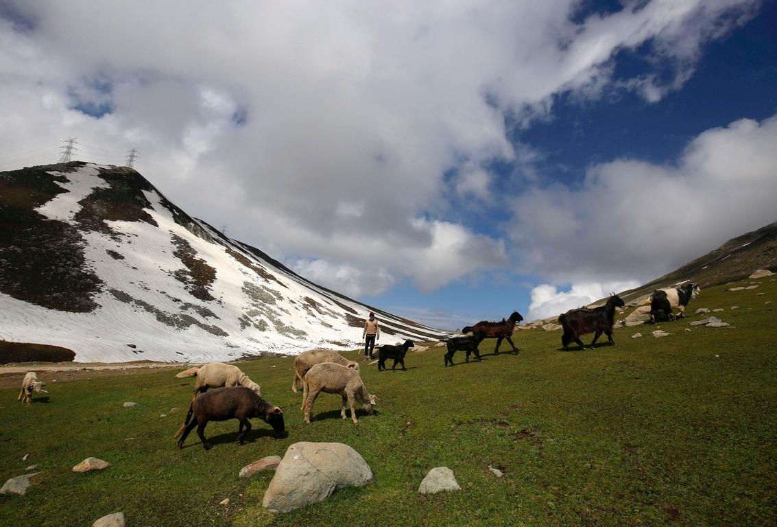 <p>Членове на номадската общност Бейкървал се&nbsp; движат по пътя в планината към Могол Роуд, на около 80 километра южно от Шринагар, лятната столица на Индия Кашмир.</p>
