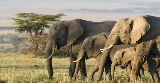 Свят Тревога, светът е пред шесто масово изчезване на животински