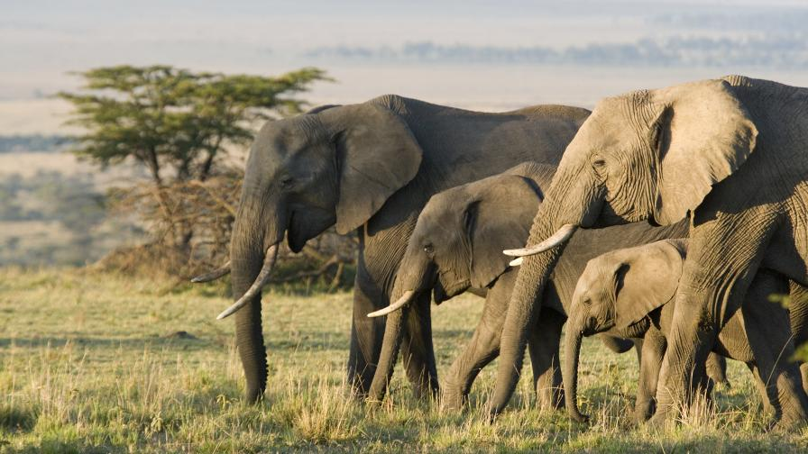 Тревога, светът е пред шесто масово изчезване на животински видове в историята си