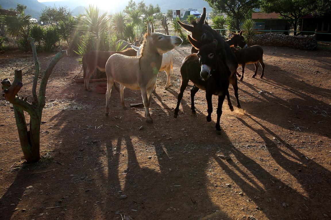 <p>Районът предлага подслон за всички магарета, които са жертва на изоставяне или злоупотреба в цялата страна</p>
