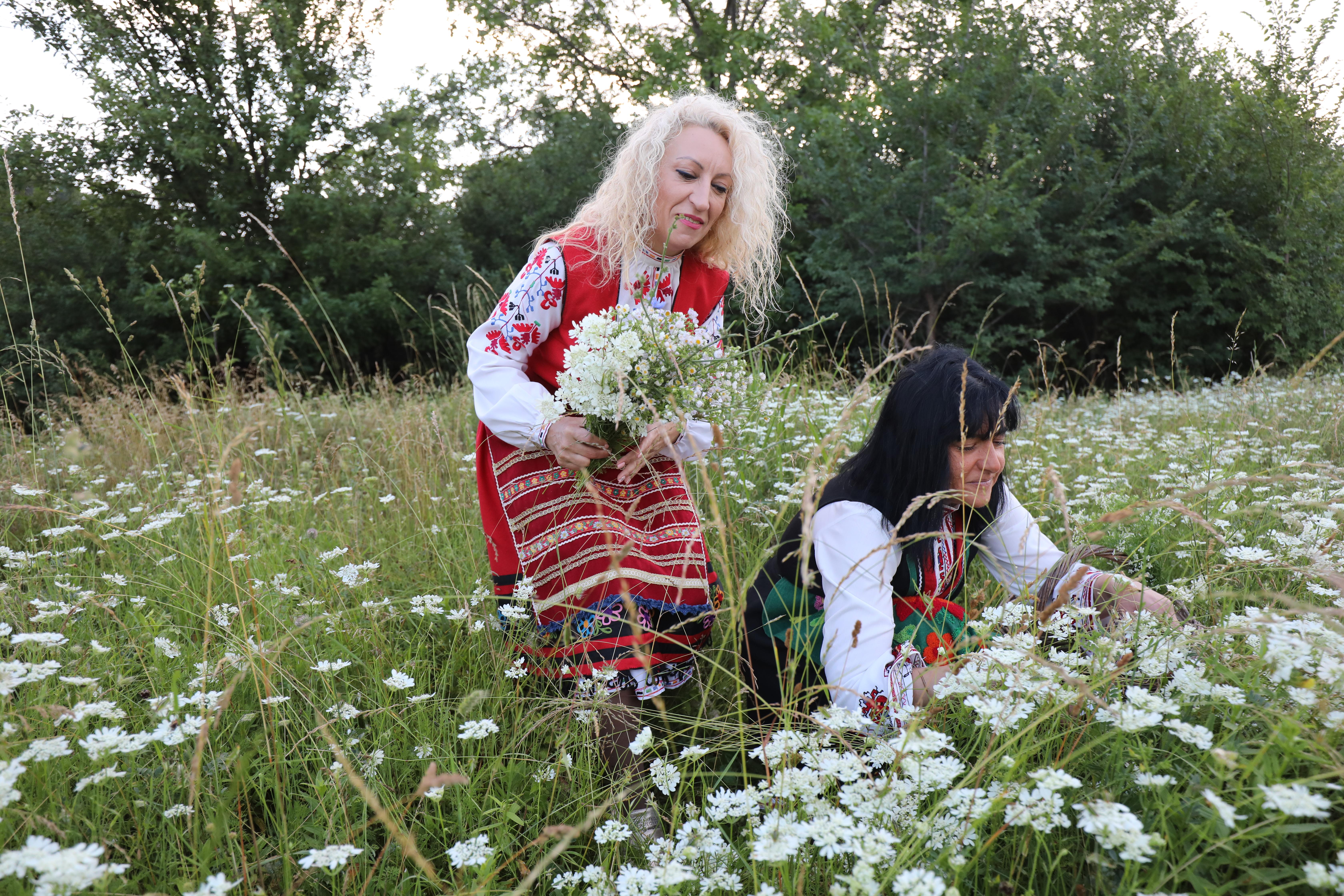 Смята се, че на Еньовден различните треви и билки имат най-голяма лечебна сила, особено на изгрев слънце. Според народните вярвания еньовденските билки се използват за лекуване на хората. С тях се лекуват бездетни жени, прогонват се зли духове, правят се магии за любов и омраза.