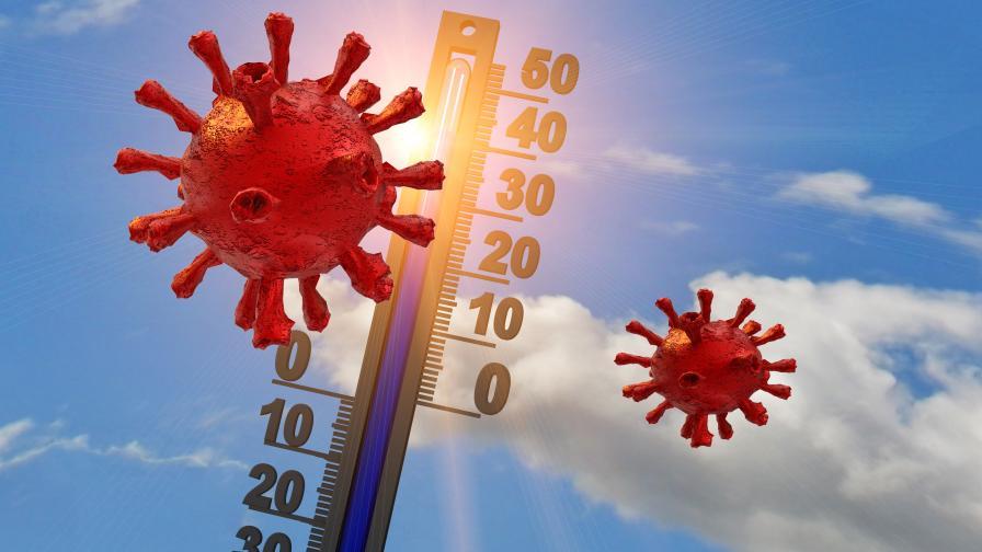 Вирусолог: Използвайте лятото, за да укрепите имунната си система