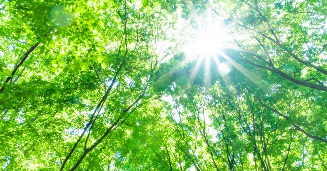 Любопитно Изгубената гора - ключът за разбиране на климатичните промени