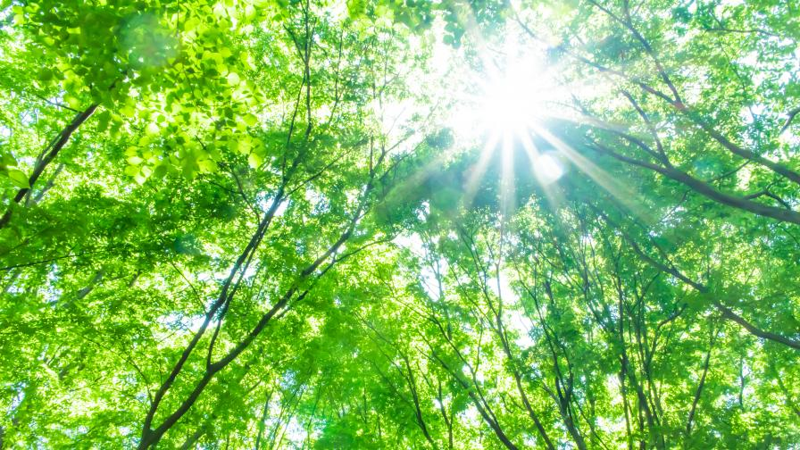 Изгубената гора - ключът за разбиране на климатичните промени