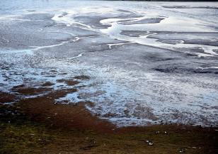 Защо расте броят на бобрите в Арктика