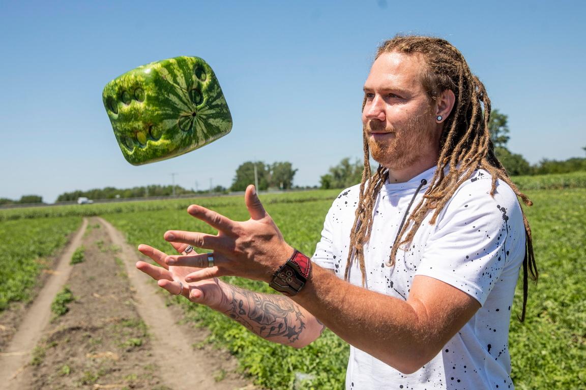 <p>Земеделския производител Робърт Пап подхвърля диня от новата реколта във формата на зар, отглеждани за експериментални цели, във фермата си в Ходмезьовашархей, Унгария</p>