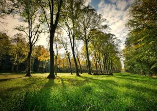 """Подменят стари дървета в градините """"Чайка"""" и """"Рила"""""""