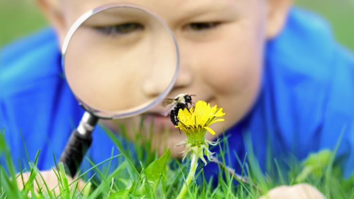 Как пчелите помагат на детския имунитет