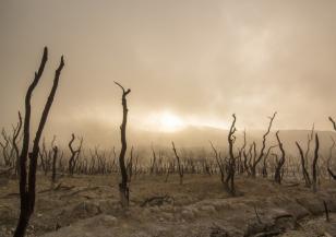 Тежка суша застрашава Централна Европа