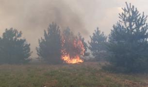 <p>Пожарите в Хасковско са потушени</p>
