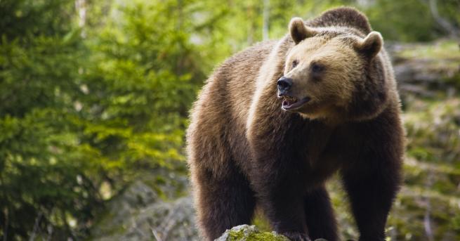 Любопитно Какво прави Камчатка перфектния дом за кафявите мечки Най-голямата