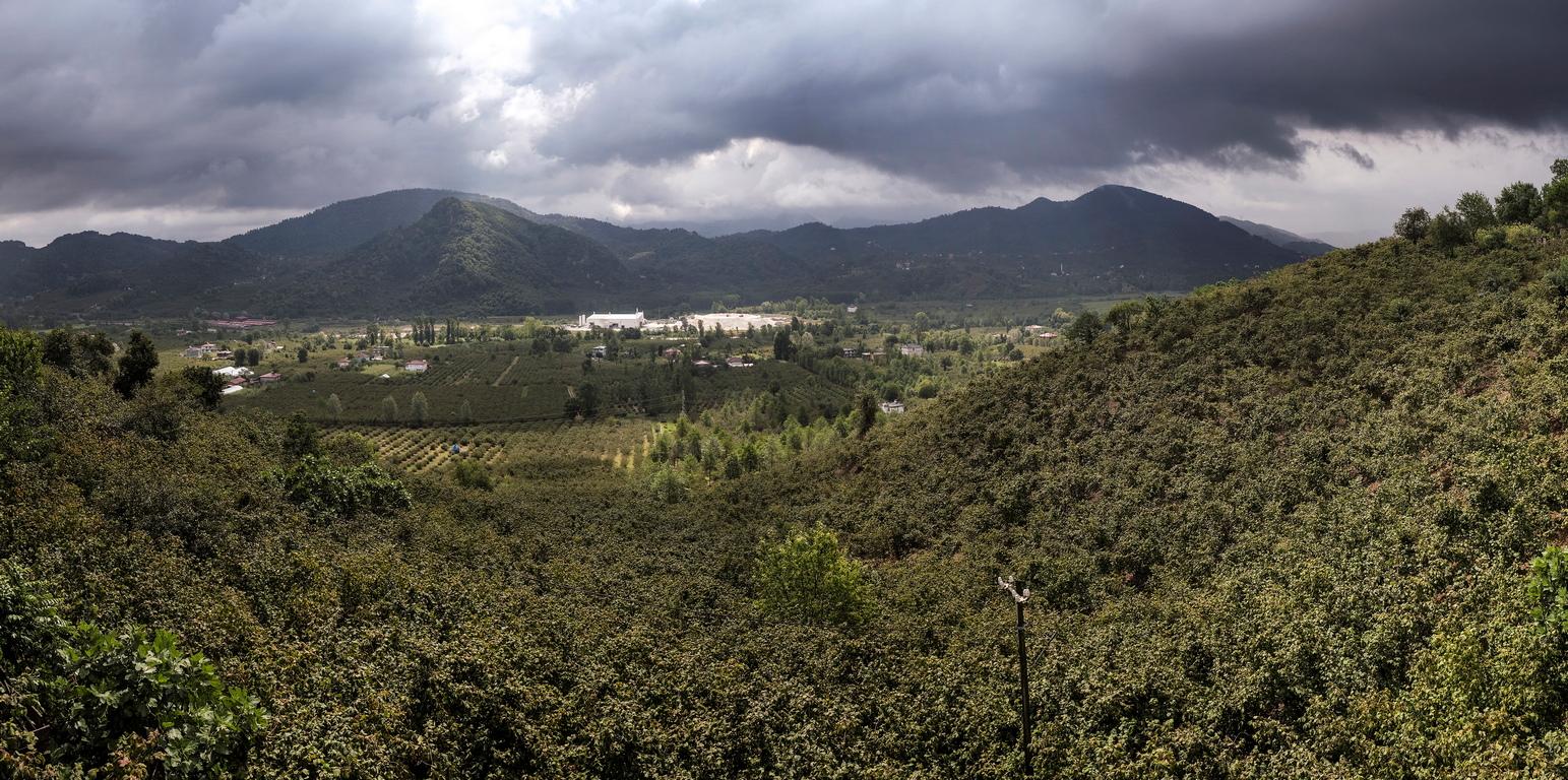 <p>Черноморският регион близо до Орду е основният производител на лешници в Турция</p>