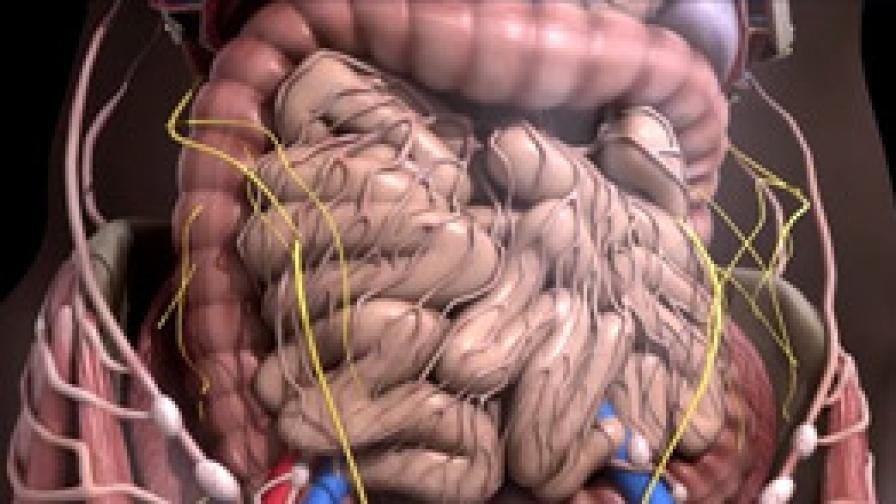 <p>Умен пробиотик спасява корема</p>