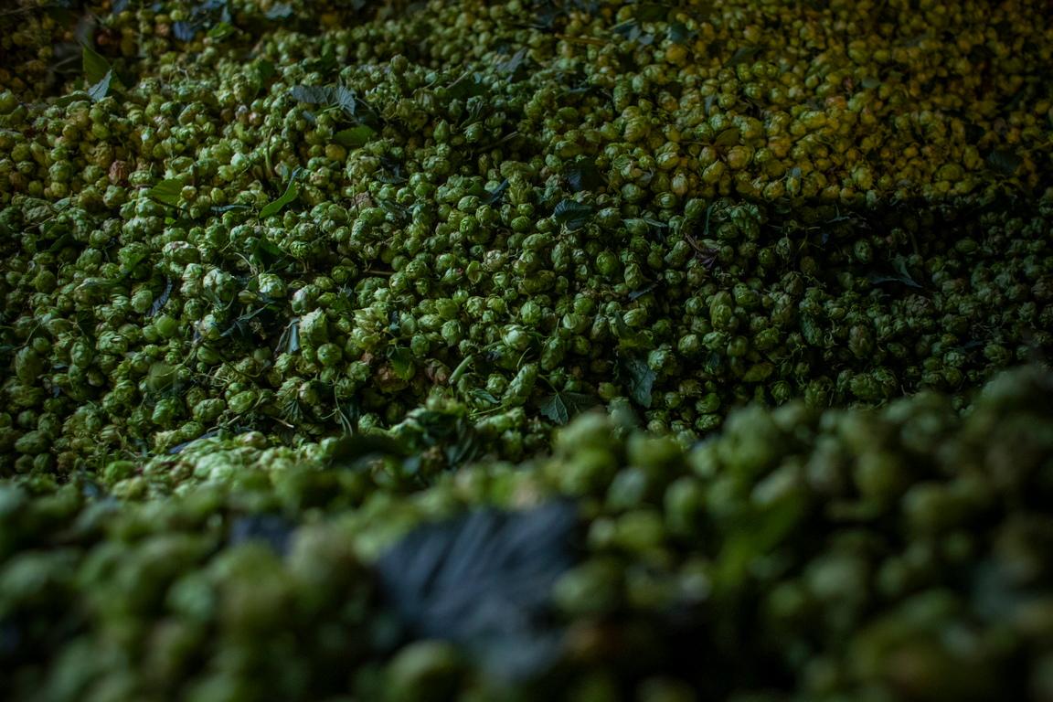 <p>То лиши крафт пивоварите от клиенти и доходи, като за сметка на това им остави големи запаси от бира с бързо изтичащ срок на годност.</p>