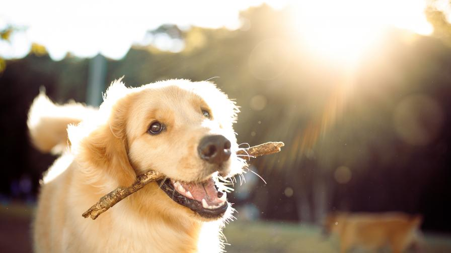 Сензация: Куче се притече на помощ на закъсал автомобил