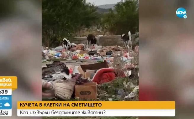 Кучета в клетки се озовават на сметището в Самоков