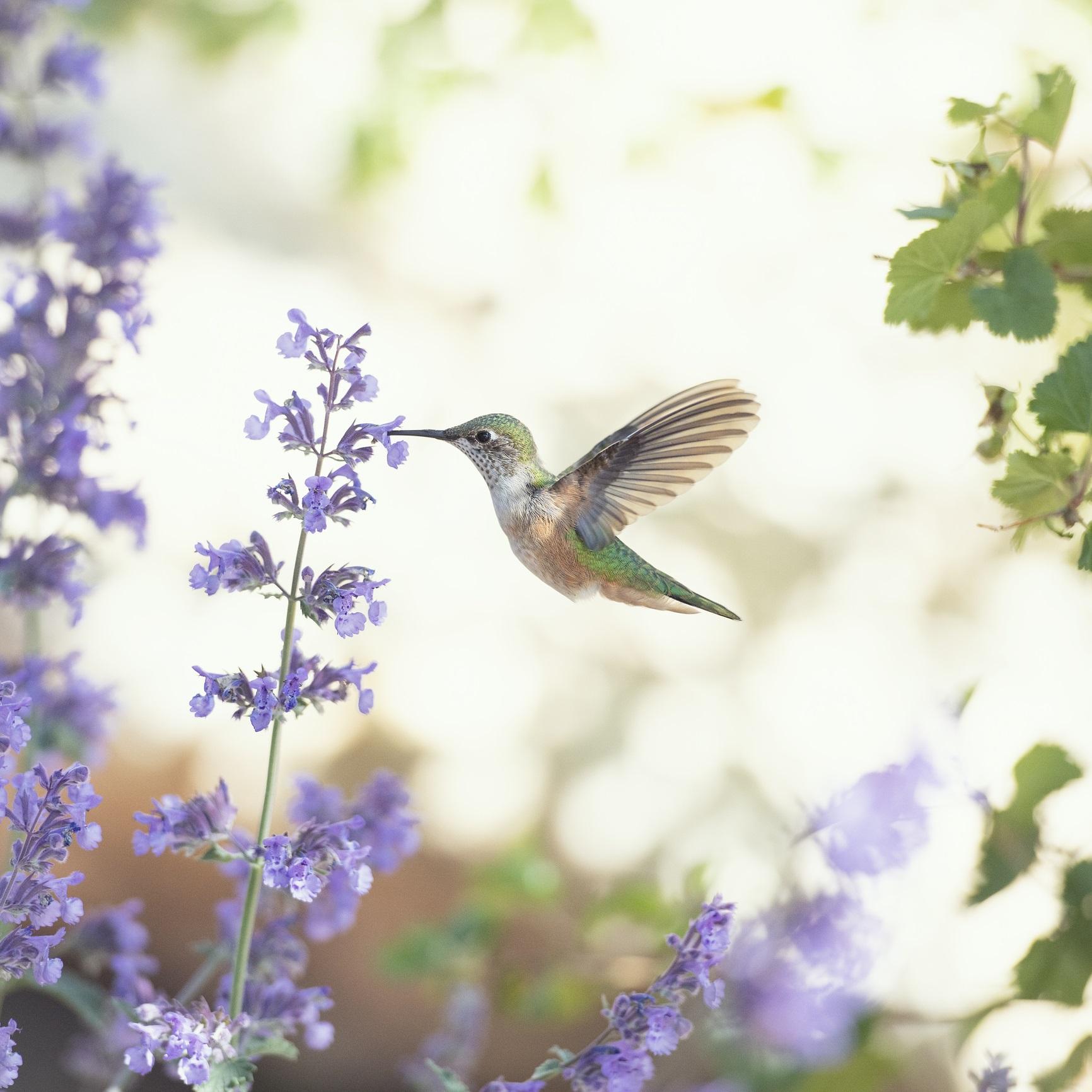 <p><strong>В обратната посока</strong></p>  <p>Колибри &ndash; тези мънички и екзотични същества са единствените птици в света, които могат да летят назад.</p>