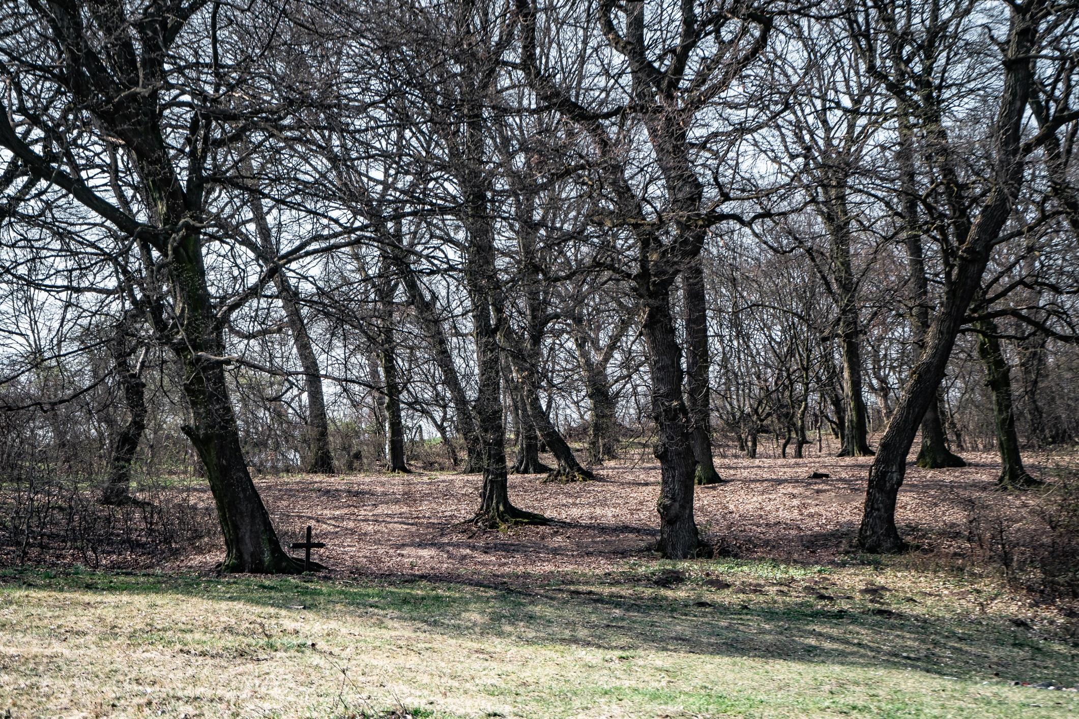 <p><strong>Гората Хоя Бачу в Румъния</strong></p>  <p>Тази зловеща гора се намира близо до град Клуж-Напока в Трансилвания. За първи път тя е обявена за &bdquo;обитавана&rdquo;, когато военен техник фотографира нещо, което обявява за НЛО и което се появява в онази част от гората, известна като &bdquo;просеката&rdquo; през 1968 г.</p>