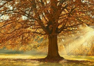 Пътят на листата от короните до корените на дърветата