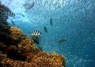 В океана е открита огромна структура от корали