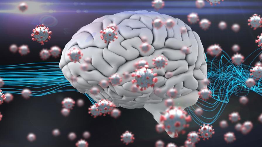 Как Ковид-19 засяга човешкия мозък