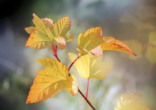 Времето в първите есенни дни