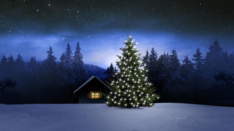 елха зима коледа сняг природа