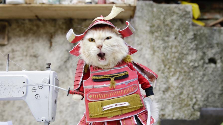 От хиджаб до косплей, вижте тези уникални котешки костюми (СНИМКИ)