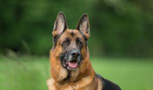 Най-опасните породи кучета