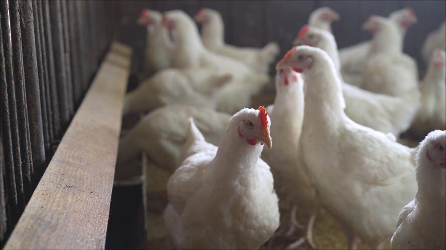 Птичи грип: Словения е обявена за рискова