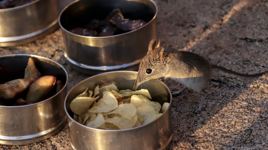 Откриха видове, смятани за изчезнали преди ковид-19
