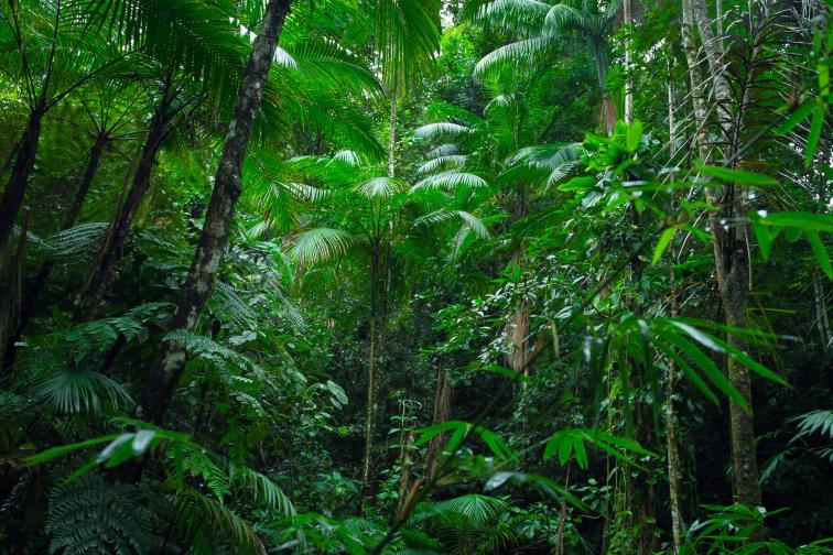 тропическа гора