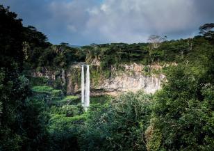 Унищожени са милиони хектари тропически гори