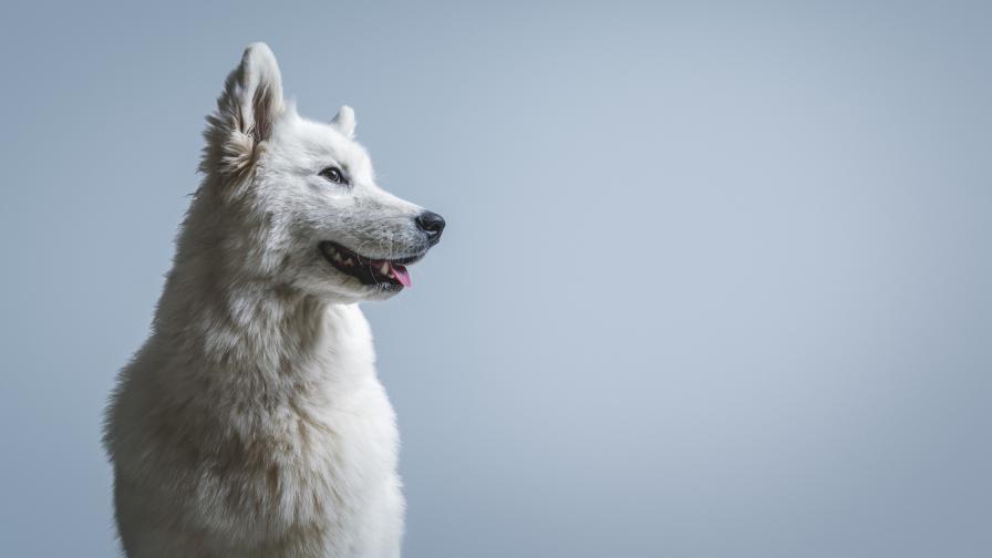 Предано куче чака дни наред стопанина си пред болницата