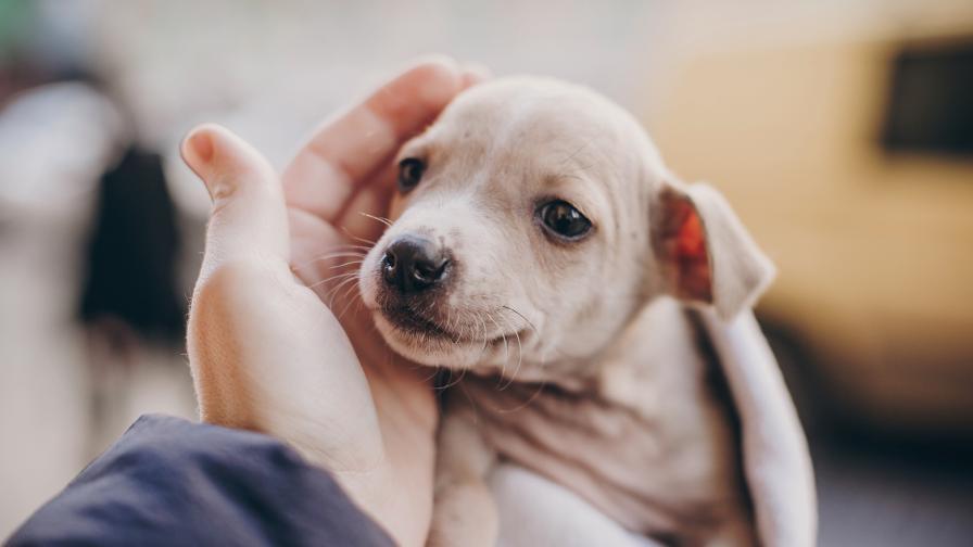 Как да обучите кученцето да ползва пелена