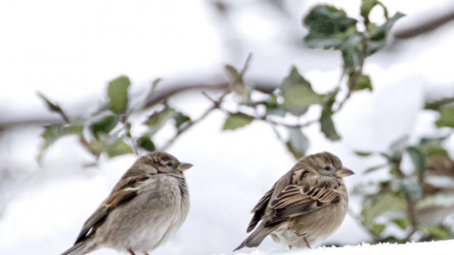 Кога зимата се завръща със студ и сняг
