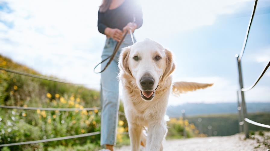 Как кучетата могат да помогнат в битката с COVID-19
