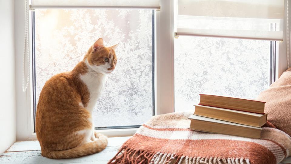 дневен котка книги