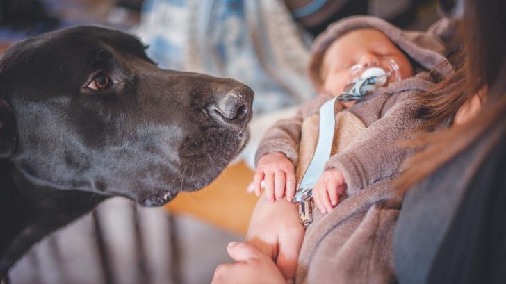Герой на четири лапи: куче заведе мъж до бебе, изоставено в сметище