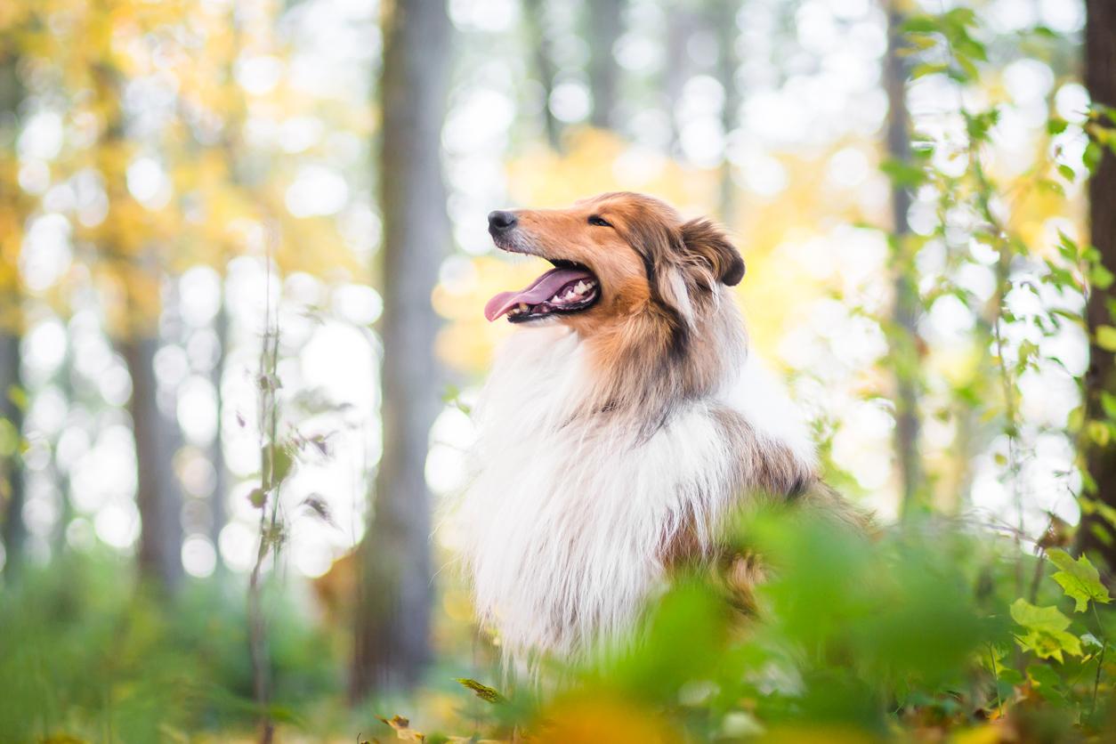 <p><strong>Не галете главата им и не повдигайте ръката си над главата им -</strong> Доста често се случва, когато хората галят куче, да поставят ръка върху главата му. Ветеринарен лекар споделя, че този жест може да изглежда като акт на агресия и да предизвика бурна и агресивна реакция от страна на кучето. Затова той предлага да се приближим до кучето и да спуснем ръката си ниско до него, за да му позволим да ни подуши и съответно опознае.</p>