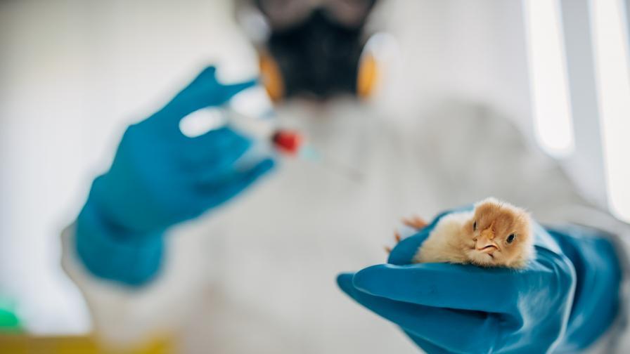 Китай регистрира първи случай на H10N3 на птичи грип