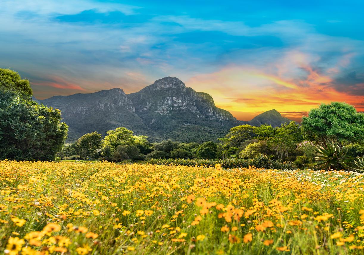 <p>Ботаническа градина &bdquo;Кирстенбош&ldquo;, Южна Африка</p>
