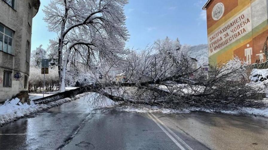 Голямо дърво падна в центъра на Шумен