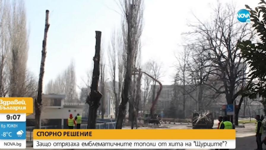 """Отрязаха тополите в Хасково, възпети от """"Щурците"""""""