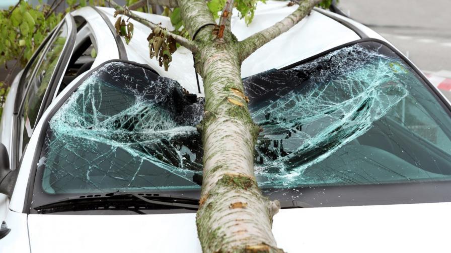 <p>Вятърът събори дървета, потрошени коли</p>