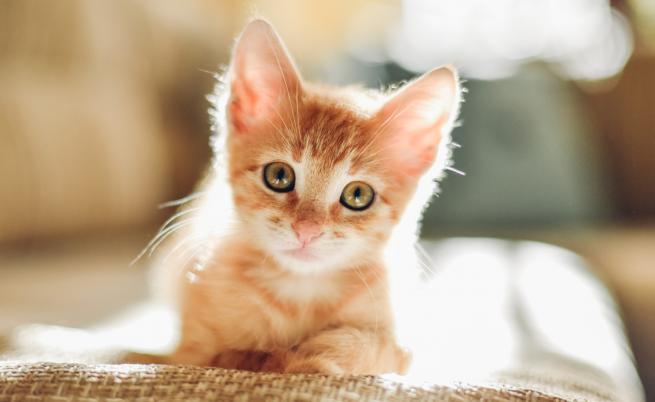 Кои породи котки се чувстват комфортно в апартамент