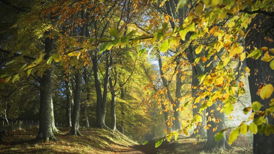 Тревога: Над 4 млн. гори са унищожени по света през 2020 г.
